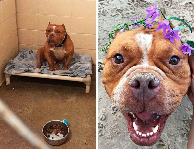homeless dogs after getting adopted